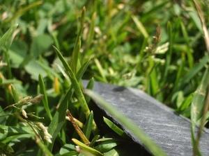 Cómo mantener un jardín ecológicamente